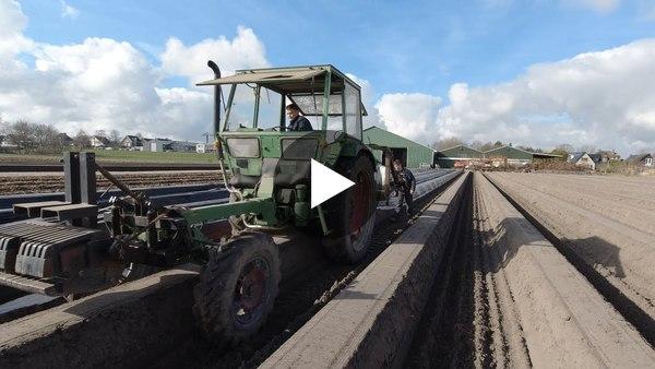 WOUBRUGGE - Aspergehof Noordam dekt aspergebedden af (video)