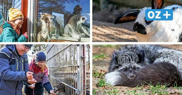 Besucheransturm im Wismarer Tierpark nach monatelangem Lockdown