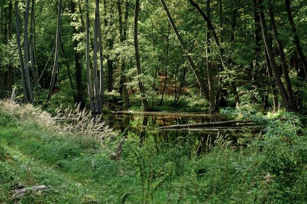 Idylle pur: das Nonnenfließ im Naturpark Barnim. Foto: Sina Schwarz