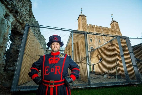 Skaife heeft de merkwaardigste baan van Groot-Brittannië: hij is ravenmeester van de Tower of Londen