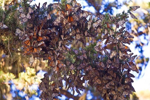 Aanbevolen door de redactie. Een bos vol fladderende vlinders & Meer