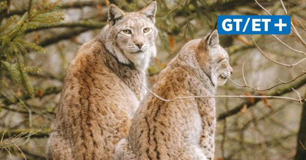 Rund um Göttingen: Tierparks öffnen wieder für Besucher