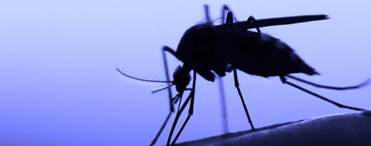RNA-vaccine mod malaria