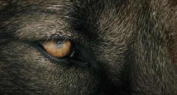 Wildlife Killing Contests – The Movie