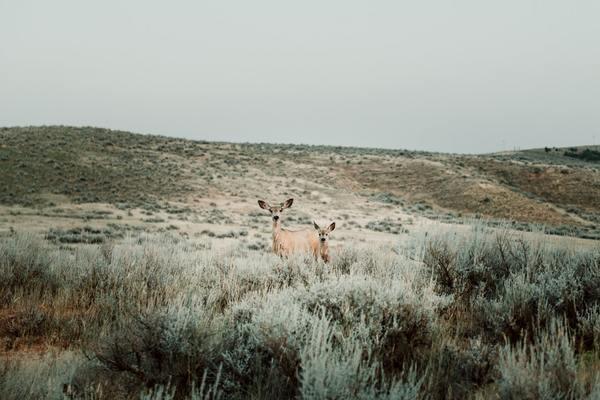 Feds Finalize Wyoming Wildlife Killing Plans