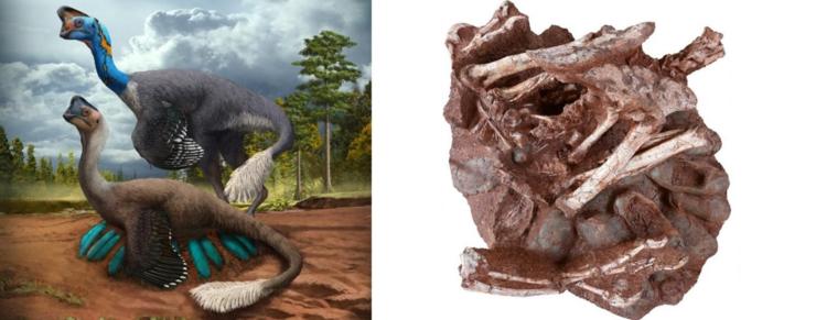 Unik palæontologisk opdagelse