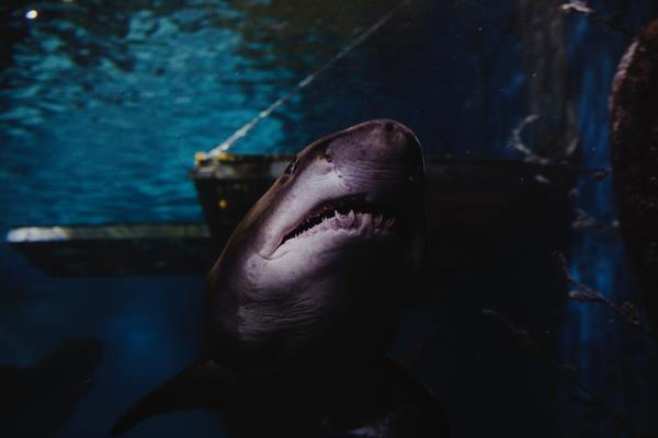 Somebody one day compared overfitting with a shark waiting in the shadows... 😦