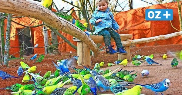 Marlow: Vogelpark freut sich auf Besucher