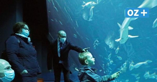 Neustart für Stralsunder Ozeaneums: Endlich wieder Fische gucken!