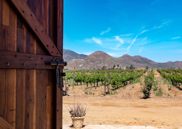 Wine tasting in Mexico: Where to go and what to try in the most famous regions