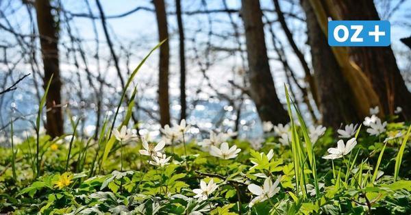Rügen: Frühlingsgefühle in Putbus erleben