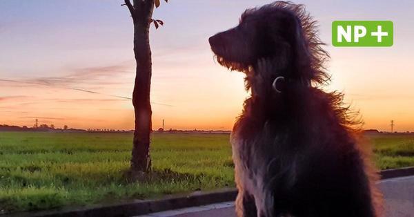 Hannovver: Die Hundehaltung wird teurer - aber nur moderat