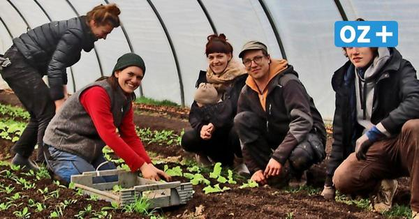 Hof in Boienhagen versorgt Menschen mit Gemüse-Abo: So funktioniert's