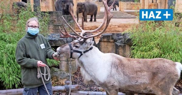 Nach Gerichtsurteil: Zoo Hannover öffnet wieder – für Jahreskartenbesitzer