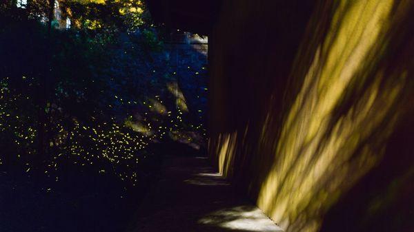 Glühwürmchen-Watching: Das steckt hinter dem Touristen-Trend auf TikTok
