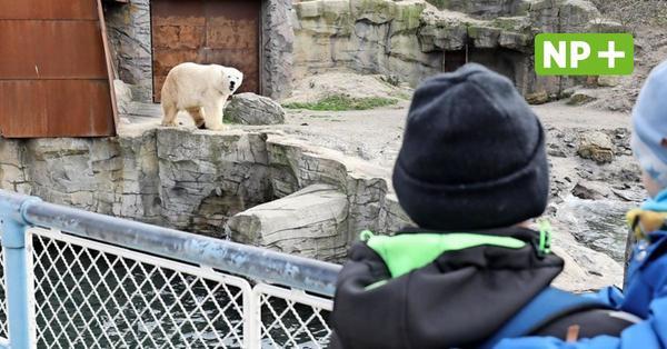 Tag 1 nach dem Corona-Lockdown: So ist es im Zoo Hannover