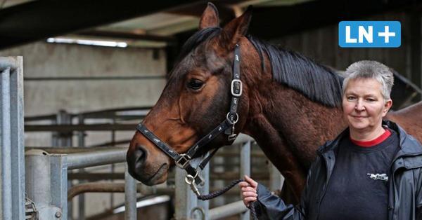 Herpes: So schützen Reiter im Herzogtum Lauenburg ihre Pferde gegen das Virus