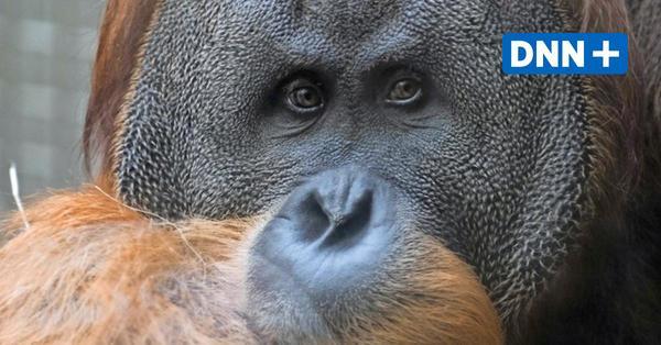 Zoo Dresden erhöht zum 1. Juni die Eintrittspreise
