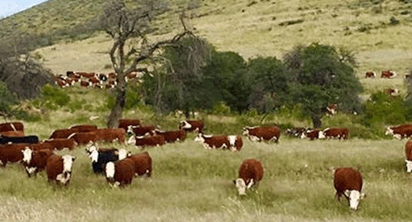 Stocking Rates vs. Grazing Days, Recovery Rates and Necessary Impact