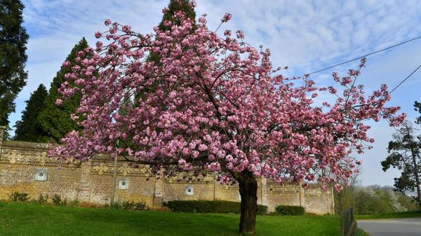Cinq idées de balades autour des abbayes dans le Nord - Verken de abdijen van Noord-Frankrijk