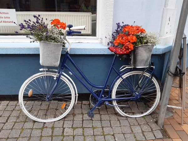 Das Blumenfahrrad steht an der Mollistraße in Bad Doberan. (Foto: Anja Levien)