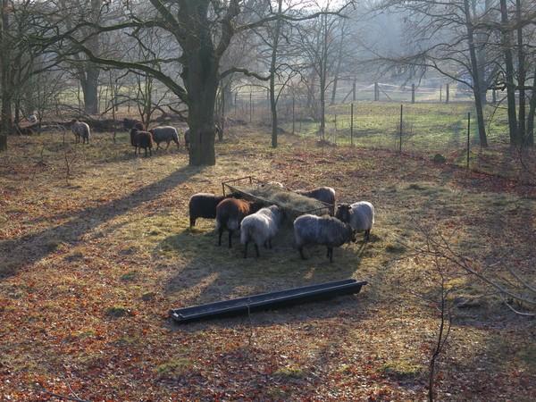 Herrliche Ruhe in der Döberitzer Heide. (Foto: Jens Wegener)