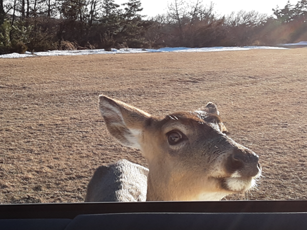 This curious little deer was sent to me by a HIAS subscriber. Thank you Mark!