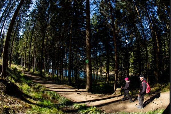 Der Harz ist ein beliebtes Wanderrevier und bietet Touren ohne Massenandrang. (Foto: Swen Pförtner/dpa)