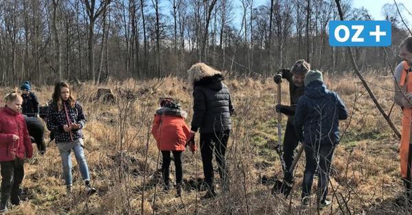Kandeliner Schüler pflanzen 1000 Bäume für den Klimaschutz