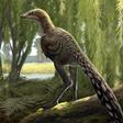 Tamarro, l'esquiva nova espècie de dinosaure carnívor dels Pirineus – Tribuna d'Arqueologia