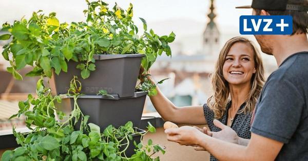 Endlich Frühling: Gemüse und Kräuter auf dem Balkon anpflanzen? So geht's