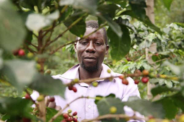 Will Kenya Support Its Coffee Farmers?