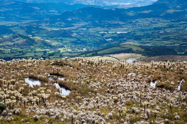 Ecosistemas de América Latina, en riesgo por la crisis ambiental