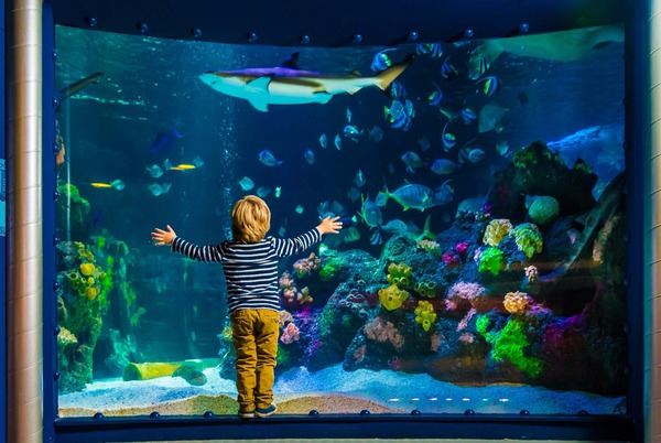 Staunen über die Unterwasserwelt im Timmendorfer Sealife. Foto: Ulrich Perrey