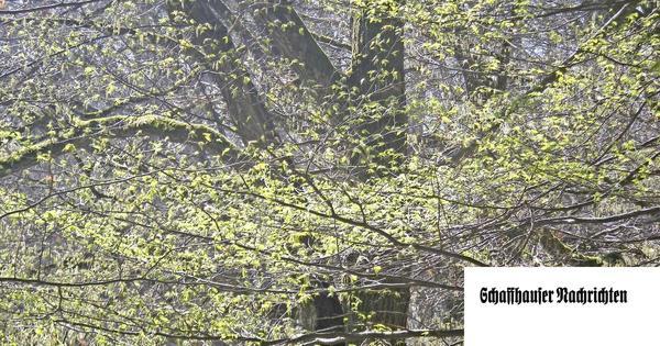 Frühlingserwachen und Waldsterben