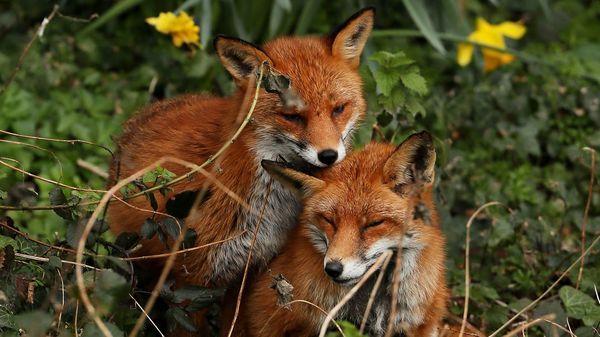 ... tote Vögel, Fuchssex & Co.: Die sieben kuriosesten Falschbehauptungen im Internet