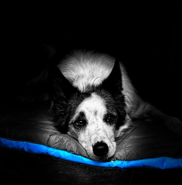 Riggs on his camping bed.