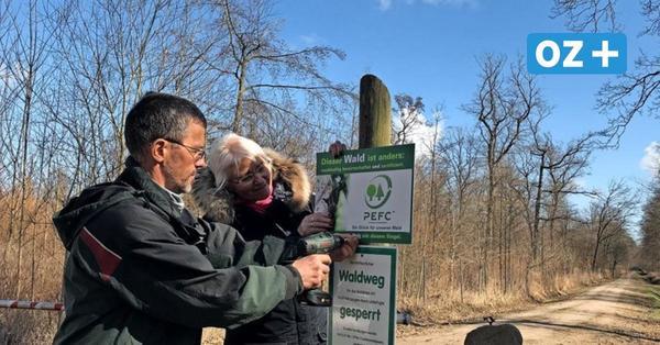 Stadtwald Grimmen zertifiziert: So schön sind die neuen Wege
