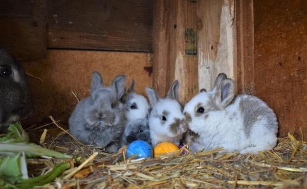 Nachwuchs im Kaninchenstall (Foto: Corinna Schaak)