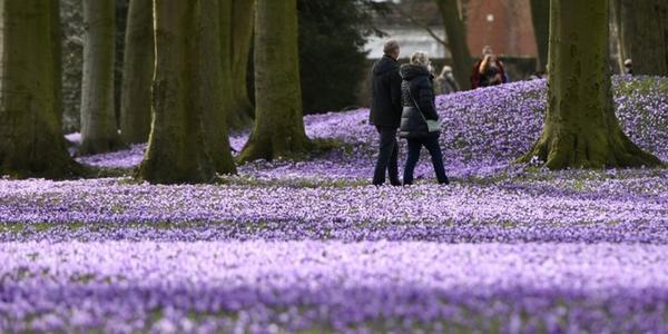 Fotoaktion: KN-online sucht die schönsten Blumenfotos
