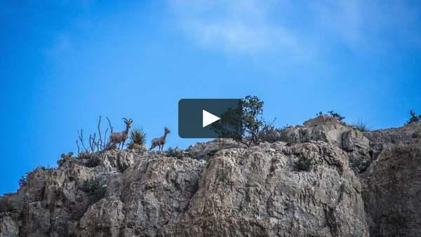 Desert Mountain Wildlife #2