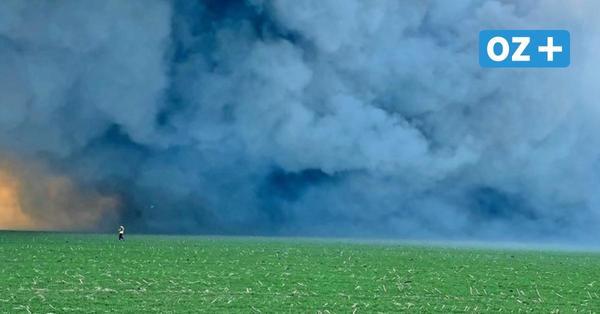 Brand in Alt Telliner Schweinezuchtanlage: Vize-Bürgermeister kritisiert Behörden