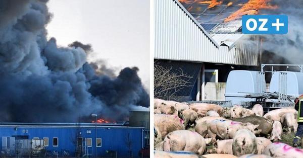 Liveticker: Großbrand in Schweinezuchtbetrieb in Alt Tellin – Ställe zerstört