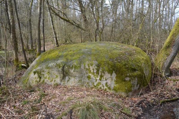 Der Riesenstein ist der größte Findling in der Prignitz. Er befindet sich mitten im Wald unweit von Ponitz. Foto: Bernd Atzenroth