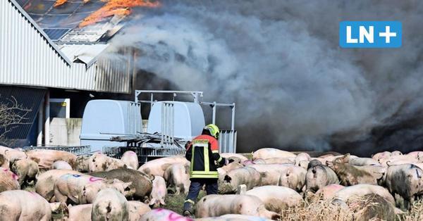 Tausende Tiere in Ferkelzuchtanlage verbrannt