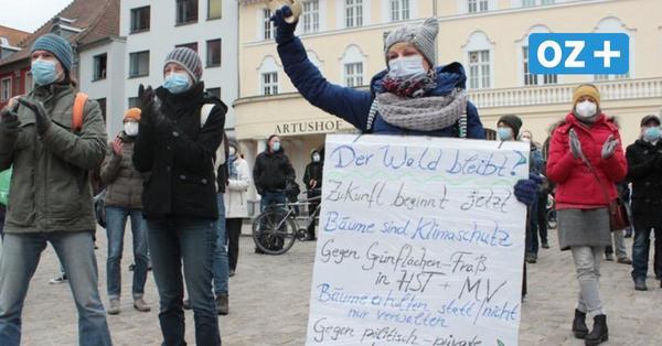 Stralsund: Wird der Andershofer Wald mitten in der Brutzeit gerodet?