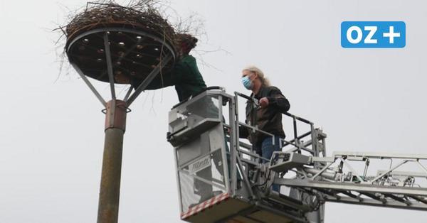 Neuer Storchenhorst in Hohenwieden wartet auf ein interessiertes Paar