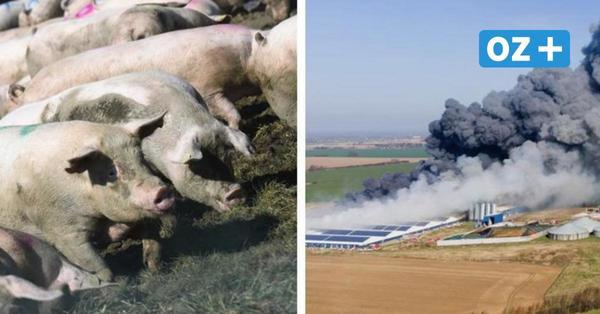 Ursache von Riesen-Stallbrand in Alt Tellin weiter unklar – Tausende Tierkadaver