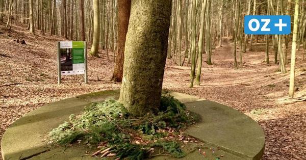 Usedom soll ersten Kinderheilwald in Deutschland bekommen: Das ist geplant
