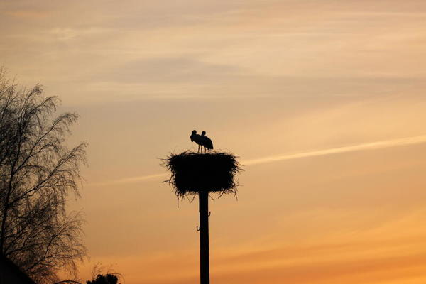 Liebe im Sonnenuntergang (Foto: Anja Wetzel)
